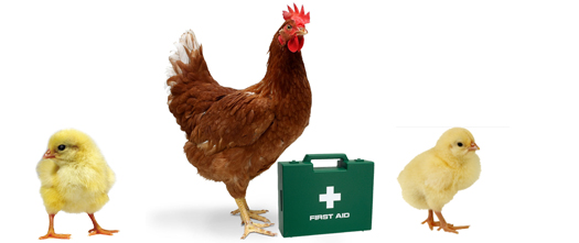 Image result for tavuk doğal antibiyotik